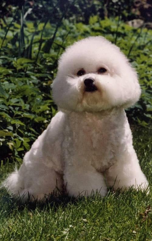 Chammi as a Puppy